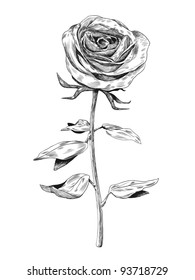 Hand-drawn rose. Vector illustration.