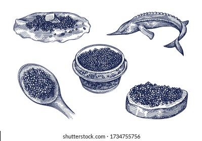 Hand-drawn set of caviar. Caviar on a spoon, in a glass jar, on a bread slice, on a pancake, ossetra fish. Black caviar. Sea food. Caviar canapé