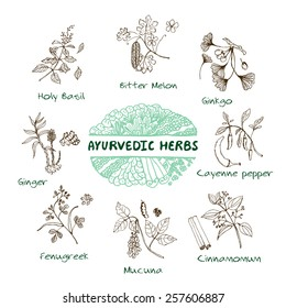 Handdrawn Set - Health and Nature. Collection of Ayurvedic Herbs. Natural Supplements. Bitter melon, Holy Basil, Mucuna, Ginkgo, Cayenne pepper, Fenugreek, Cinnamomum, Ginger