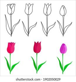 A hand-drawn set of tulips.A Tulip flower. vector illustration in the Doodle style. Floral design.Elements are isolated on a white background
