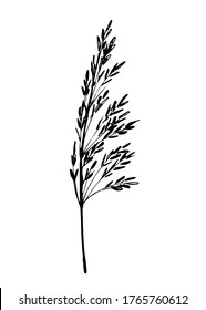Hand-drawn simple ink vector sketch. Element of nature, grass field plant, flower branch, spikelet. Cereal crop. Wild weed. For prints, labels, packaging.