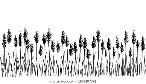 Hand-drawn simple vector drawing in black outline. Wild steppe pampas grass, reeds, panicle inflorescences. Nature, landscape. Ink sketch, long banner.
