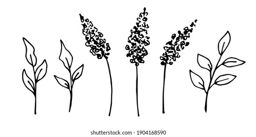 Hand-drawn simple vector drawing in black outline. Set of lilac branches, foliage, inflorescences, leaves. Spring flowers, bush. Floral elements for decorating postcards, products, creating a pattern.