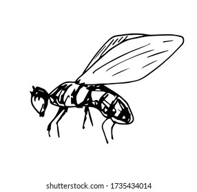 Hand-drawn simple vector illustration with black outline. Insect, fly, bee isolated on a white background. Element of wildlife.