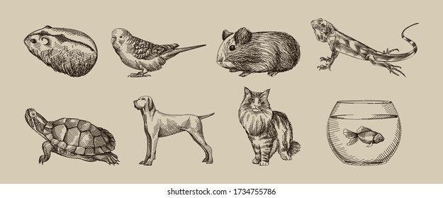 Hand-drawn sketch of domestic animals set. Set consists of hamster, guinea pig, lizard, turtle, dog, cat, tank with fish, parrot