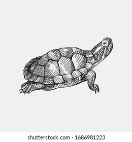 Hand-drawn sketch of a turtle on a white background. Domestic animal. Home pet. Domestic turtle. Domestic tortoise