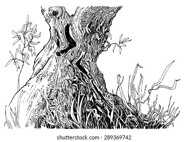 Line Drawing Bark Of A Tree Images Stock Photos Vectors
