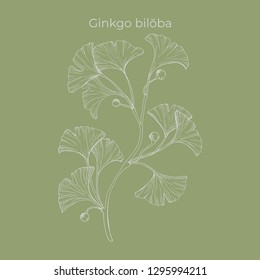 Hand-drawn vector ginkgo biloba branch