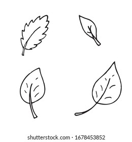 hand-drawn vector illustration, element without background, leaves from a tree