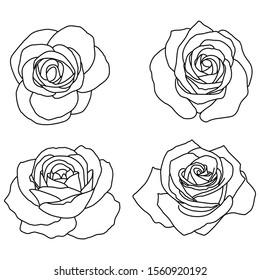 Hand-drawn vector illustration. Roses on a white background. Silhouette of a rose.