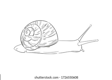 Hand-drawn vector snail. Minimalist outline illustration. Sketch line art drawing isolated on white background. Stylized engraved element for cosmetic packaging design, logo, label, banner.