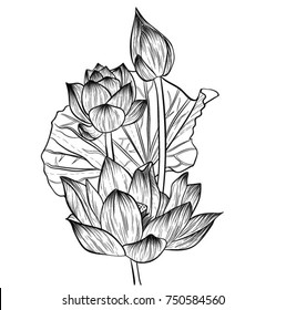 Hand-drawn water lily flowers drawing line-art.Vector, illustration and clip art on white backgrounds.Idea for business visit card, typography vector,print for t-shirt.