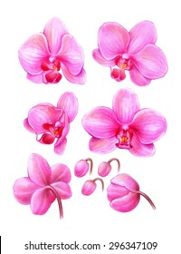 handmade color pencils drawing of a beautiful pink orchid flowers and buds