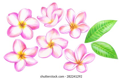 handmade color pencils drawing of gentle plumeria flowers