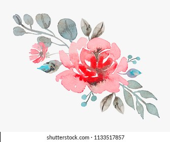 handmade watercolor rose vector illustration isolated on ligth grey background