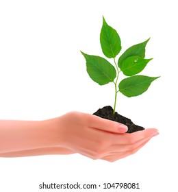 Hands holding young plant. Vector.
