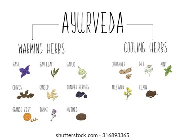 Hand-sketched collection of elements of Ayurvedic spices in our kitchen. Vector illustration. Warming and cooling Herbs and supplements Ayurveda.