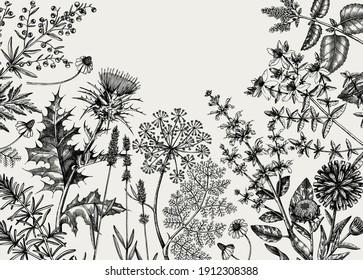Hand-sketched herbs, flowers, weeds, meadows background. Medicinal plants vintage frame. For cosmetics, perfumery, medicine, packaging. Herbal tea ingredients banner. Medicinal herbs design.
