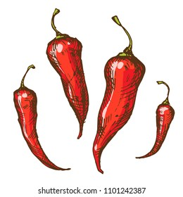 Handsketched vintage style vector ink illustration of red spicy and hot chili, thai and cayenne peppers isolated on white background.
