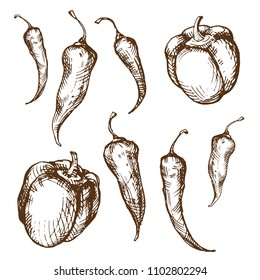Handsketched vintage style vector ink set of different paprika sorts. Bell, serrano, chili, cayenne, jalapeno, tabasco and thai pepper pods illustration isolated on white background. Spicy collection