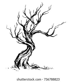 Handsketched vintage vector illustration of old crooked tree. Dry wood, tinder. Deciduous oaktree ink sketch on white background. Freehand linear picture in retro doodle graphic style.