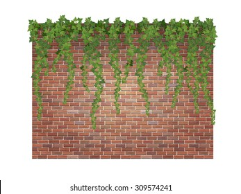 Hanging down ivy shoots on the brick wall background.