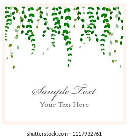 Hanging Vines Frame Vector Illustration Art, Ivy Overlay, Invitation Graphic Design