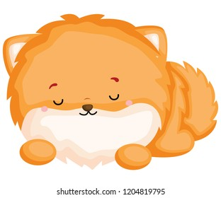 a happy and adorable corgi pure breed dog