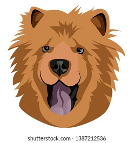 Chow Chow White Background Stock Illustrations Images Vectors