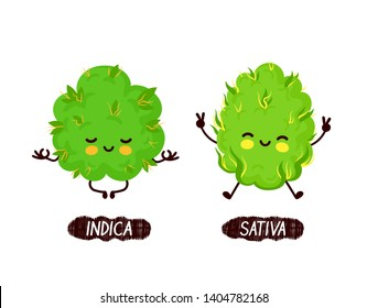Happy cute smiling indica and sativa weed bud.Vector flat cartoon character illustration icon.Isolated on white background.Weed bud drugs,marijuana yoga,medical cannabis,indica vs sativa concept