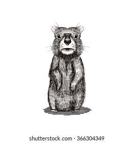 Happy Groundhog Day design with cute  hand drawn  by pen groundhog. Engraving illustration.
