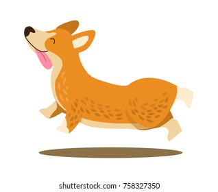 Happy playing corgi with protruding tongue in jump isolated on white background. Vector illustration with cute smiling dog happily running