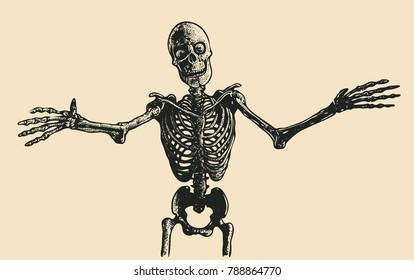 A Happy Skeleton Wants To Cuddle. vector illustration