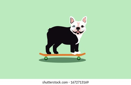 Happy, small, black and white bulldog with pointed ears and one blue and one brown eye standing on an orange skateboard with green wheels and a shadow beneath while smile isolated on green background