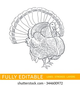 Happy Thanksgiving Day. Thanksgivings turkey. Editable strokes vector for easy changing design.