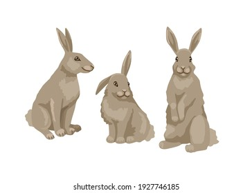 Hare in different poses, a bunny is sitting and standing. Vector character, childish illustration of zoology. Isolated object on a white background.