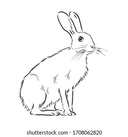 hare, doodle style sketch illustration hand drawn vector, hare vector sketch illustration