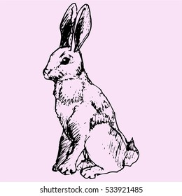hare, doodle style sketch illustration hand drawn vector
