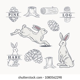 Hare in forest elements