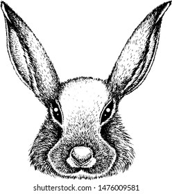 Hare. Ink drawing. Vector illustration.