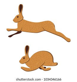 Hare runs, jumps. 2 poses. Vector illustration isolated on white background. Brown rabbit, bunny
