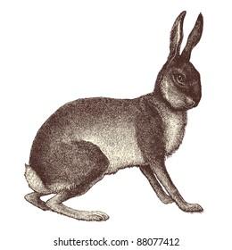 "Hare - Vintage engraved illustration - ""Cent récits d'histoire naturelle"" by C.Delon published in 1889 France"