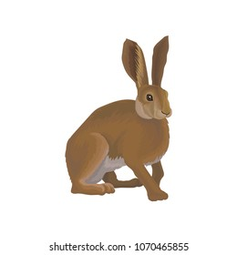 Hare wild northern forest animal vector Illustration on a white background