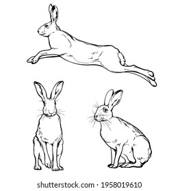 Hares, black and white drawing. Vector illustration isolated on a white background.