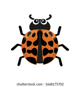 Harlequin ladybird vector cartoon isolated on white background. Asian ladybeetle. Harmonia axyridis insect vector illustration. Multicolored Asian ladybug beetle cartoon.