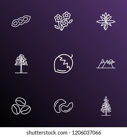 Harmony icons line style set with soy bean, cashew, daisy and other fir elements. Isolated vector illustration harmony icons.