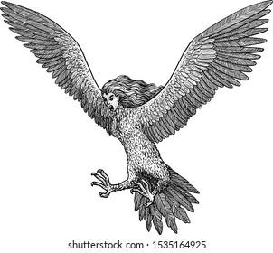 Harpy illustration, drawing, engraving, ink, line art, vector