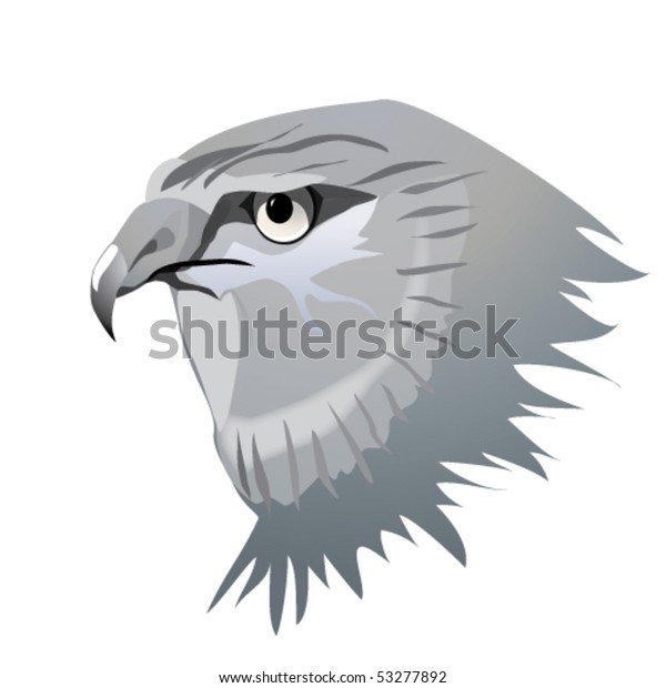 Harrier hawk head in grey.