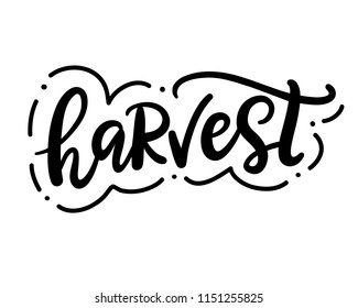 Harvest fest typography poster with hand drawn lettering. Autumn greeting card, t-shirt print, isolated on white background. Vector illustration.