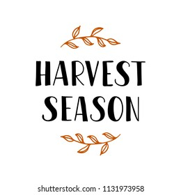 Harvest season - hand drawn lettering phrase. Greeting card with autumn leaves. Harvest fest poster design. Vector illustration. Isolated on white background.